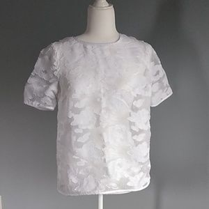 Cato Sheer Lace Top